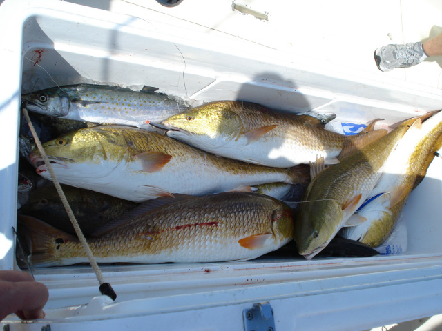 Fishing the gulf coast and biloxi mississippi aboard happy for Mississippi fishing charters